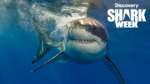 SharkWeek 2019